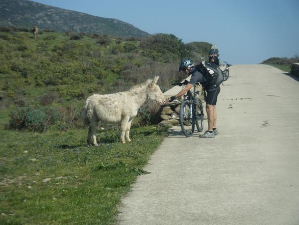 asinara donkey sardinia