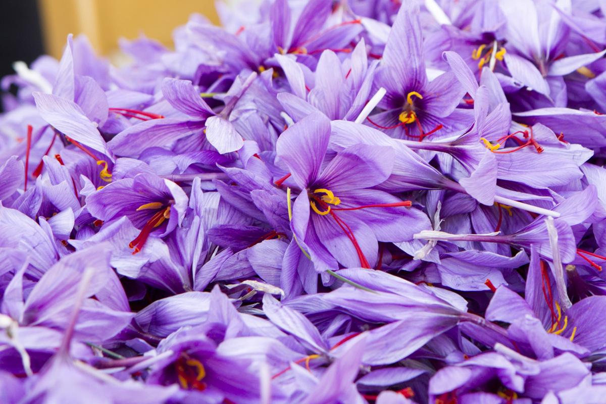 saffron1