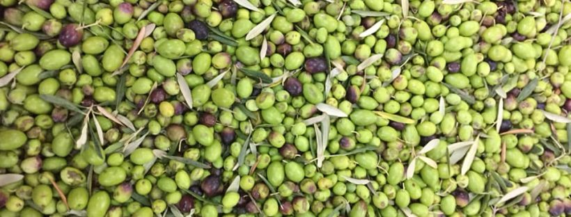 things to know about olive oil