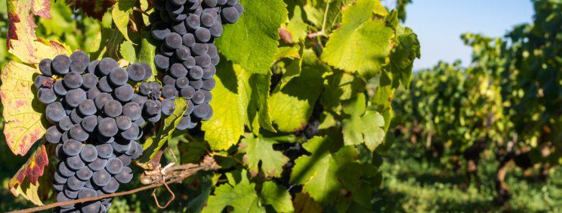 wine tours in abruzzo