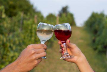wine tours abruzzo